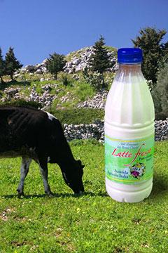 Azienda agricola Italia: latte fresco intero pastorizzato e omogeneizzato di alta qualità