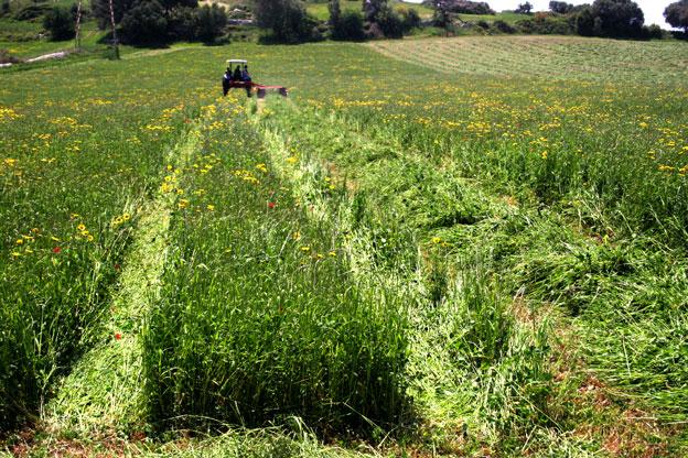 Agriturismo a Siracusa con animali: campi coltivati a foraggi